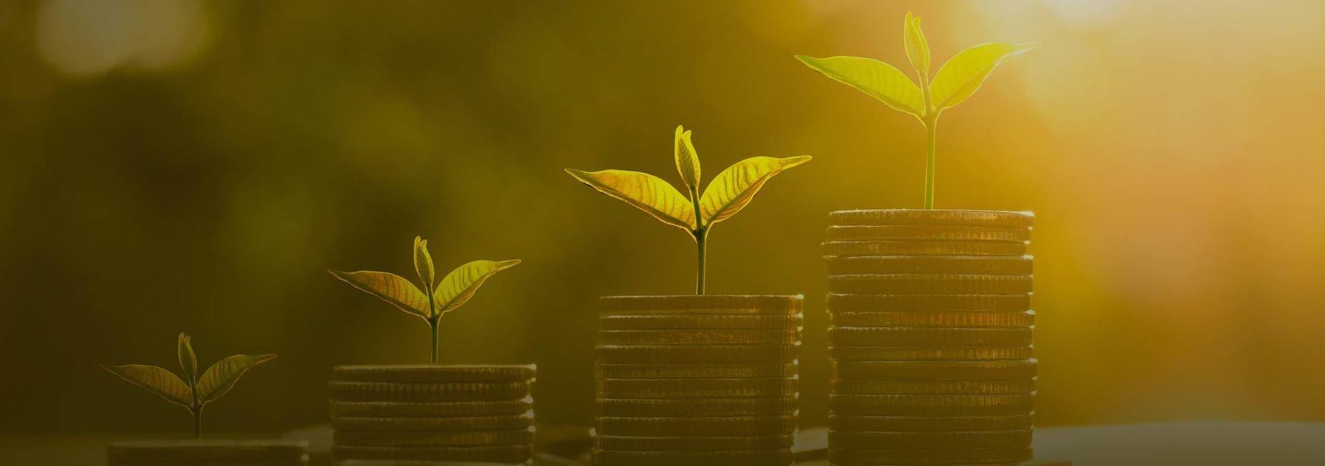 NEDFi Venture Capital Limited | Venture Capital